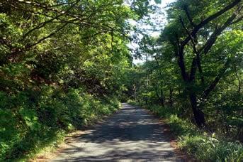 明神の森までの山道