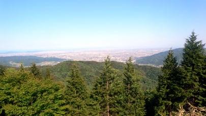 明神の森展望台