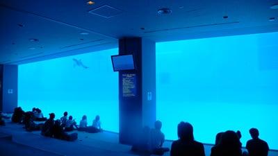 水中観覧室