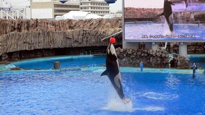 イルカのショーやシャチの公開トレーニング