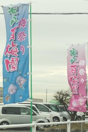 安八百梅園の梅祭り