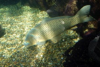 アクア・トト ぎふの魚