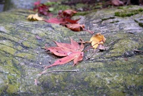 横蔵さんの紅葉の写真