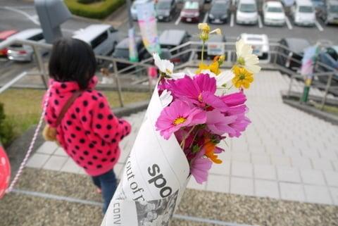 コスモスの花束の写真