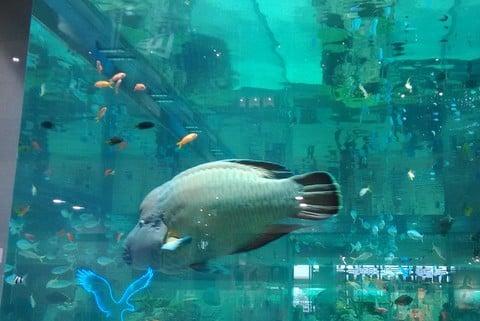 イオンモール沖縄ライカムの水槽の写真