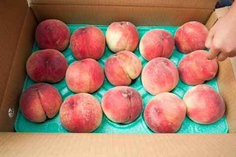 購入した桃の写真