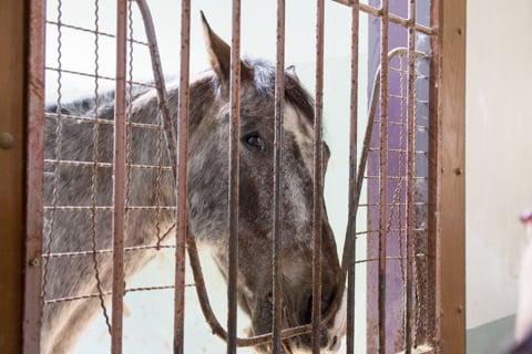 馬さんの写真