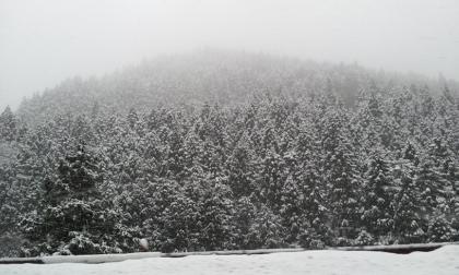 見に来た時の雪の写真